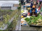 kebun-sayur-rusak-pasca-terendam-banjir.jpg