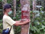 kegiatan-sertiflkasi-sumber-benih-bpth-wilayah-i-palembang-bpth-banjarbaru-selasa-2872020.jpg