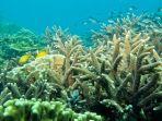 keindahan-terumbu-karang-di-perairan-pulau-samber-gelap-kotabaru-kalsel-13042021.jpg