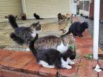 kucing-kucing-liar-di-turki.jpg