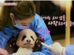 member-blackpink-saat-bermain-dengan-bayi-panda.jpg