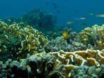menyelam-di-perairan-pulau-samber-gelap-kabupaten-kotabaru-provinsi-kalsel-13042021.jpg