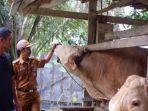 muhammad-sholeh-bersama-sapi-miliknya-yang-dibeli-presiden-joko-widodo.jpg