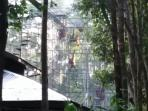orangutan-kalimantan_20160411_213129.jpg