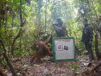 orangutan_20171110_111514.jpg