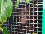 orangutan_20180122_143027.jpg