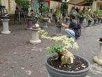 pameran-bonsai-jalanan-dukung-gerakan-sejuta-masker.jpg