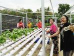 pembudidayaan-sayuran-hidroponik-di-desa-mekarsari-kabupaten-tapin-kalsel-18092021.jpg