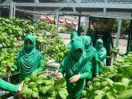 pengurus-dan-anggota-persit-kodim-1011-kualakapuas-kalteng-panen-sayuran-hidroponik.jpg