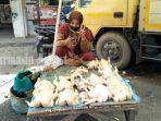penjual-ayam-mama-jastin-di-pasar-bauntung-kota-banjarbaru-provinsi-kalimantan-selatan.jpg