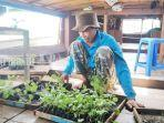 penjual-bibit-sayur-di-pasar-baru-kota-marabahan-kabupaten-batola-kalsel-09022021.jpg