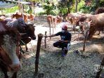 penjual-hewan-kurban-di-kawasan-mayjen-sungkono-rabu-87.jpg