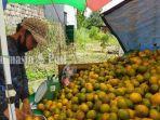 penjual-jeruk-lokal-di-jalan-trikora-banjarbaru-kalsel-rabu-1282020.jpg