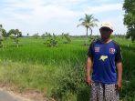 petani-dengan-lahan-persawahan-yang-ada-di-kelurahan-mantuil-banjarmasin-selatan_20180605_085437.jpg