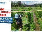 petani-desa-jingah-babaris-tapin-sukses-budidaya-demplot-hortikultura-01.jpg