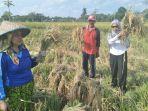 petani-desa-pengambau-hulu-kecamatan-haruyan-hulu-sungai-tengah_20180125_183609.jpg