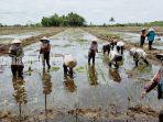 petani-desa-talio-hulu-kecamatan-pandih-batu-pulangpisau-kalteng-lahan-bergambut-02022021.jpg