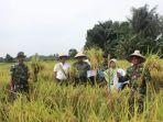 petani-di-desa-kias-kecamatan-batangalai-selatan_20180131_212803.jpg