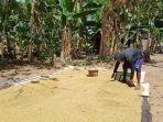 petani-di-desa-malukabaulin-kecamatan-kurau-kabupaten-tanahlaut_20180810_230748.jpg
