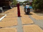 petani-di-desa-paya-besar-kecamatan-batubenawa_20180311_183707.jpg