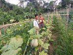 petani-melon-balangan-ngan.jpg