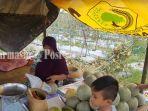 petani-melon-di-dusun-tampunang-desa-shabah-kecamatan-bungur-kabupaten-tapin.jpg