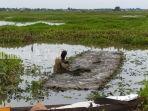 petani-padi-di-lahan-rawa-desa-harusan-telaga-kabupaten-hsu-kalsel-sabtu-2762020.jpg