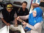 petugas-balai-karantina-memperlihatkan-kepiting-hasil-sitaan-yang-akan-dilepasliarkan-di-pulau-kaget_20170201_142734.jpg