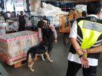 petugas-dan-anjing-pelacak-saat-di-bandara-syamsudin-noor.jpg