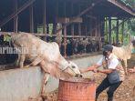 petugas-dinas-pertanian-kabupaten-hss-akan-periksa-hewan-kurban-rabu-14072021.jpg