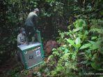 petugas-yayasan-bos-melepas-17-orangutan-hasil-rehabilitasi-ke-taman-nasional.jpg