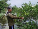 pohon-jeruk-menguning-akibat-terendam-banjir-di-desa-karang-indah-kabupaten-batola-12022021.jpg