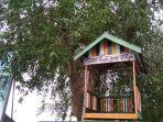 pohon-rambai-ini-menjadi-ikon-di-kampung-hijau-kota-banjarmasin.jpg
