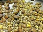 ratusan-batu-ginjal-ini-diambil-dari-seorang-pasien-di-china_20150609_193035.jpg