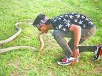 rizki-ahmad-yang-bermain-dengan-ular-king-cobra_20180708_234742.jpg