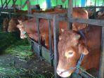 rph-banjarmasin-alami-penurunan-daging-sapi-hingga-50-persen-sampah.jpg