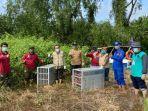 sahabat-bekantan-indonesia-sbi-dan-bksda-kalsel-melaksanakan-pelepasliaran-bekantan-1.jpg