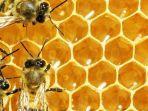 sarang-lebah.jpg