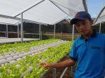selada-sayuran-organik-produksi-bumdes-agro-bina-bersama.jpg