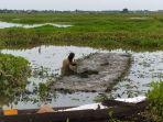 seorang-petani-di-hsu-tengan-menyemai-benih-padi-rabu-262021.jpg