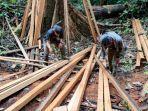 sidak-di-meratus-warga-temukan-ilegal-logging.jpg