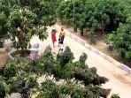 taman-buah-lintang-batang-hortifarm-jalan-tjilil-riwut-satu.jpg