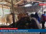 tempat-peternakan-sapi-di-salah-satu-daerah-di-kabupaten-tala-kalsel-1392020.jpg