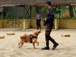 tiga-ekor-anjing_20171219_121049.jpg