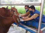 tim-dokter-hewan-dan-petugas-lapangan-dinas-ketahanan-pangan-kota-tangerang.jpg
