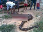 ular-berukuran-besar_20170331_110824.jpg