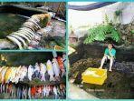 viral-pria-bayar-orang-untuk-bersihkan-kolam-ikan-tapi-setelahnya-semua-ikan-mati.jpg