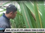 wakil-ketua-dpc-ppp-jombang-tewas-di-kebun-tebu_20180317_205559.jpg