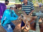 warga-desa-tanjung-antusias-memeriksakan-sapinya-di-lokasi-layanan-kesehatan-terpadu.jpg