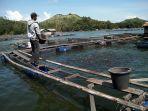 warga-tiwinganbaru-sibuk-memberi-makan-ikan.jpg